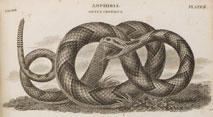 Engraving of Snake